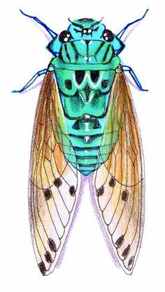 Drawing by Vicky Pratt. Cicada Zammara. teal / turquoise. Find me on Facebook Vicky Pratt - Illustrator. www.vicpratt.wix.com/vickypratt