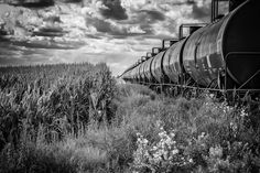My #shotoftheday today is a #blackandwhite shot done with #nik #silvereffectspro.  ISO 100 1/320 sec. f/9 70mm on my #sony #a6300.  This shot of a #train with #tankcars #tankers in the #cornfield in #summer with #dramatic #skies and #wildflowers Follow me at http://ift.tt/29Gb81w