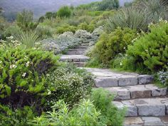 Papudo Garden: Located in Papudo, V Region, Chile. Designed by Chilean landscape architect Juan Grimm. Posted on Garden Design by Carolyn Mullet FB page.