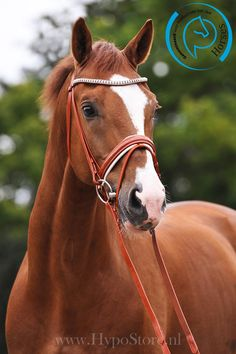 Hunter jumper eventing horse equine grand prix dressage equestrian. Want this bridle so badly
