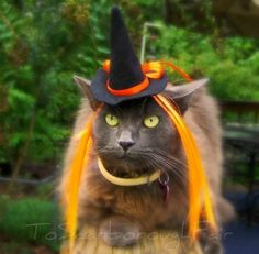 The Witch of Orange   __ What is FREECABA? (See My Profile <@jurale13> for an Answer).
