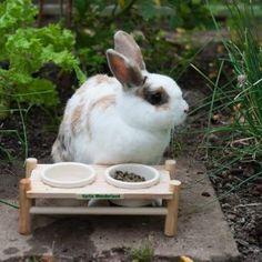 Wonderland - Table à manger pour rongeur - zooplus