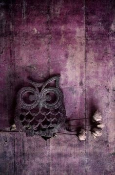 Shop for owl art from the world's greatest living artists. All owl artwork ships within 48 hours and includes a money-back guarantee. Choose your favorite owl designs and purchase them as wall art, home decor, phone cases, tote bags, and more! Purple Love, All Things Purple, Plum Purple, Purple Rain, Shades Of Purple, Deep Purple, Black Plum, Purple Sunset, Dark Red