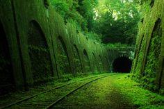 Mossy abandoned train tracks