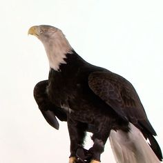 """329.3b Beğenme, 1,888 Yorum - Instagram'da National Geographic (@natgeo): """"Video by @joelsartore 