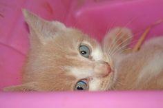 Beautiful eyes!!!!