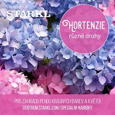 Mezi největší oblíbenkyně zahrad patří bezpodmínečně hortenzie. Za správnou péči se se Vám odvděčí věty od bílé až po modrou! 🤩  V našem zahradním centru naleznete mnoho druhů, pouze do vyprodání zásob.  #hortenzie #hydrangea #macrophylla #paniculata #arborescens #starkl #zahradnik #caslav #zahrada #zahradnictvi