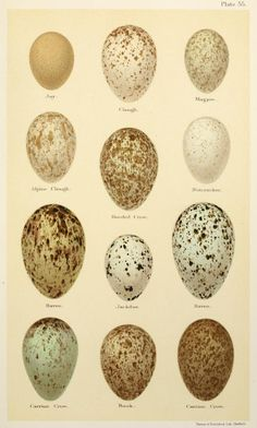 stages of bird in an egg - Google Search