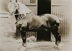 Eleveurs Wallons du Cheval de Trait Belge - - Yahoo Image Search Results