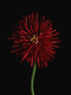 Nir Adar | Tera flowers