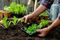 Ημερολόγιο Σποράς: Πότε Σπέρνω και Φυτεύω Λαχανικά και Βότανα - Καλλιεργώ Vegetable Garden Planner, Vegetable Garden For Beginners, Starting A Vegetable Garden, Gardening For Beginners, Organic Vegetables, Growing Vegetables, Gemüseanbau In Kübeln, Pot Jardin, Container Gardening Vegetables