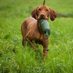 Explore in details about Clicker Training for Dogs - http://www.dog-ramblers.co.uk/dog-clicker-training/