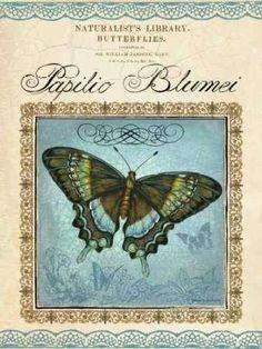 Cuadro Papilio Blumei