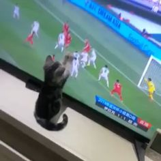 tabby kitten soccer fan - cat video - My list of the most beautiful animals Cute Kittens, Cute Baby Cats, Cute Funny Animals, Cute Baby Animals, Cats And Kittens, Funny Cats, Wild Animals, Animals Kissing, Cats 101