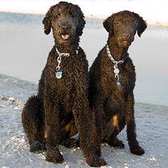 Pets on the Beach | Shooter and Bettis | CoastalLiving.com