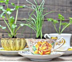 The Best Indoor Herb Garden Ideas for Your Home and Apartment (No 02)