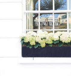 London window box (Photo via @arabellagolby)