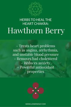 Easily heal your HEART CHAKRA with a quick cup of Hawthorn Berry. Click to get the tea ...