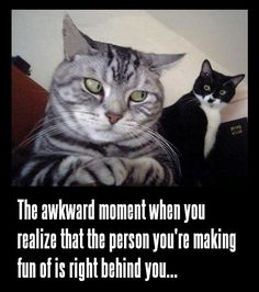 lol   ...........click here to find out more     http://googydog.com