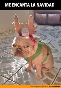 Me encanta la Navidad. Shares