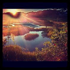Wetland, Hyannis MA