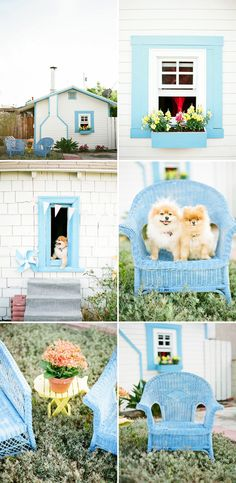 Use the grooming time for bonding with your Pomeranian.  Movements should be smooth and relaxing.  If you are in a hurry, choose a different time in the day to groom your Pomeranian.  Since the process takes an eye for detail and patience to groom all of the dog's areas, you will want to choose a time where they both of you can be relaxed.