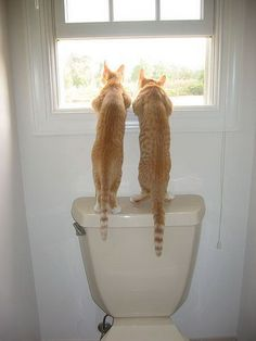 Wonder what they see.  kitties on potty
