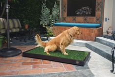 Customized to fit our Large potty grass, our tray is lightweight, durable, UV protected and raised off the ground for easy cleaning. For indoor and outdoor use. Made in California. Size: x Patent Pending. Grass, Pets, Animals, Natural, Design, Animais, Animales, Animaux, Dieren