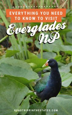 Everything you need to know to visit Everglades National Park! Click through for our guide on Road Trippin' The States.