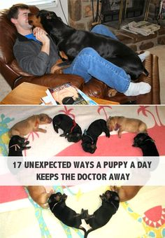 Did you know the pooch that stole your heart is also good for it? That's right, turns out your four-legged friend may be just the pup-scription for what ails you!