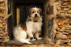 Durante un paseo por Campillo de Ranas me encontré con el perro resguardado del viento en una ventana.