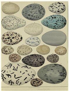 Allgemeine Naturgeschichte für alle Stände, 1841 | Flickr - Photo Sharing!