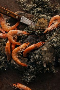 Primitive Atmosphere with Shrimp | Still Life by Gabriela Iancu.
