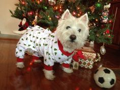 So cute, my Westie would never let me dress her up like that ;(