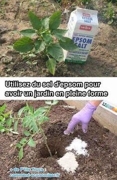 Healthy Garden Tip using epsom salt-- Easy DIY gardening tips and ideas for begi. Diy Gardening, Gardening For Beginners, Container Gardening, Organic Gardening, Flower Gardening, Garden S, Diy Garden Decor, Vegetable Garden, Gardening Vegetables