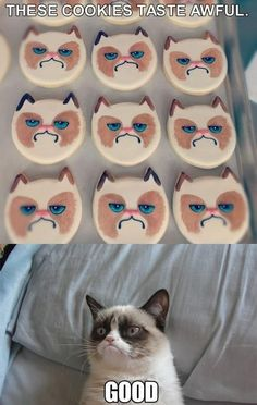 Never too much grumpy cat