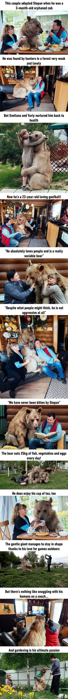 Russian Couple Adopted An Orphaned Bear 25 Years Ago, And They Are Still Living Happily Together Russian Couple Adopted An Orphaned Bear 23 Years Ago, And They Are Still Living Happily Together<br> More memes, funny videos and pics on Cute Funny Animals, Funny Animal Pictures, Cute Baby Animals, Funny Cute, Animals And Pets, Cute Pictures, Animal Pics, Wild Animals, Hilarious