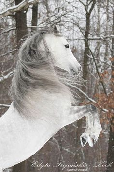 "scarlettjane22: "" Found on horses.pnet.pl """