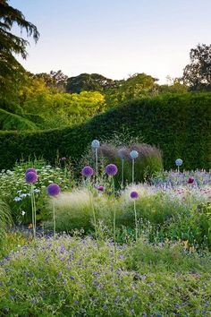 Dot Your Border With Alliums - in Country Garden Design Ideas - how to a create a well-planned herbaceous border and farmhouse or cottage look, ideas for gardens both big and small.