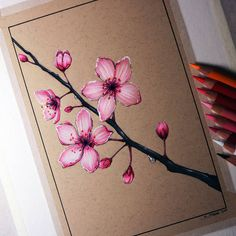 LethalChris's DeviantArt gallery Cherry Blossom Drawing by LethalChris Cherry Blossom Drawing, Cherry Blossom Flowers, Cherry Drawing, Japanese Cherry Tree, Japanese Blossom, Blossom Tree Tattoo, Blossom Trees, Tree Drawings Pencil, Art Drawings