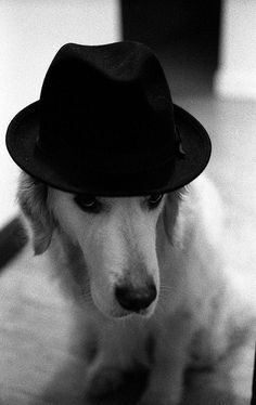 Anyone can wear a hat!