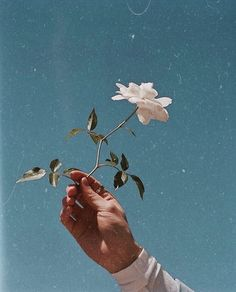 Find images and videos about white, blue and flowers on We Heart It - the app to get lost in what you love. Light Blue Aesthetic, Aesthetic Roses, Blue Aesthetic Pastel, Aesthetic Pastel Wallpaper, Aesthetic Collage, Aesthetic Backgrounds, Aesthetic Vintage, Aesthetic Wallpapers, Aesthetic Indie