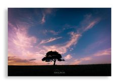 Mon arbre solitaire by Thierry Perrier on 500px