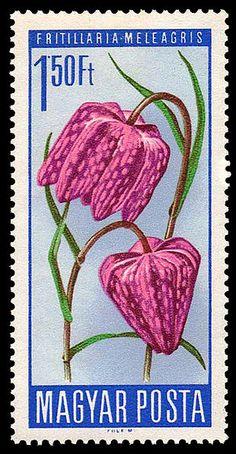 File:1744 Flowers 150.jpg