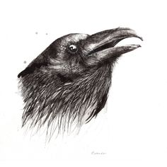 """Calling"" - Raven - ORIGINAL - 150€ Illustration by Ariane Relander Ink Illustrations, Inktober, Raven, Fine Art, The Originals, Crow, Visual Arts, Ravens, The Crow"