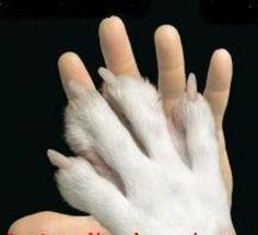 """""""Entre a brutalidade para com o animal e a crueldade para com o homem, há uma só diferença: a vítima.""""  (Lamartine)"""