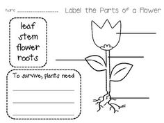 Spring Plants and Flowers Unit!  In this unit, you will find 79 pages of math & literacy, science, and writing center activities and printables including: capital/lowercase letters; writing prompts; dice games; counting games; addition; subtraction; I have who has sight word game; I have who has number game; and more!  $