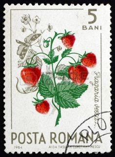 ROMANIA - CIRCA 1964: a stamp printed in the Romania shows Wild Strawberries, Fragaria Vesca, Natural Fruit, circa 1964