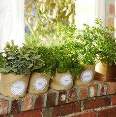 Make adorable Petite Planters using burlap. Get the patterns and label designs for FREE! From the Apr/May 2014 issue hitting newsstands now!