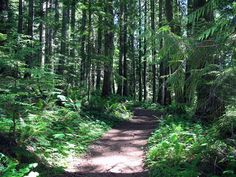 The trail that ascends Elk Mountain in Chilliwack, BC. http://www.vancouvertrails.com/trails/elk-mountain/